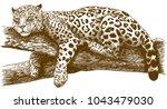vector antique engraving... | Shutterstock .eps vector #1043479030