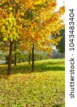 autumn tree with fallen dry... | Shutterstock . vector #1043483404