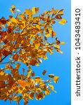 colorful autumn leaves | Shutterstock . vector #1043483410