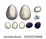 eggs set hand drawn isolated... | Shutterstock .eps vector #1043525848