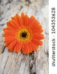Macro Of Gerbera Flower On A...