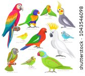 parrot vector parrotry... | Shutterstock .eps vector #1043546098