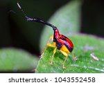 wildlife giraffe weevil beetle  ...   Shutterstock . vector #1043552458