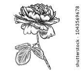 flowers. hand drawn rose. roses ... | Shutterstock . vector #1043569678