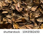 leafs fall down on the ground... | Shutterstock . vector #1043582650