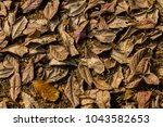 leafs fall down on the ground... | Shutterstock . vector #1043582653