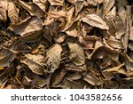 leafs fall down on the ground... | Shutterstock . vector #1043582656