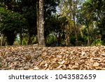 leafs fall down on the ground... | Shutterstock . vector #1043582659