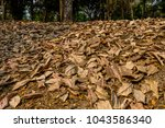 leafs fall down on the ground... | Shutterstock . vector #1043586340