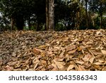 leafs fall down on the ground... | Shutterstock . vector #1043586343