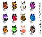 beautiful  butterfly collection ... | Shutterstock . vector #1043587078