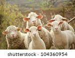 sheep within a mob turn to...