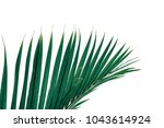 tropical palm leaf isolated on... | Shutterstock . vector #1043614924