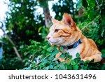 close up shot of cute ginger... | Shutterstock . vector #1043631496