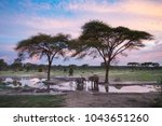 elephants at a water hole at... | Shutterstock . vector #1043651260