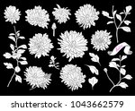 set of silhouettes of asters... | Shutterstock .eps vector #1043662579