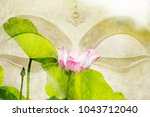 Beautiful Of Lotus Flower And...