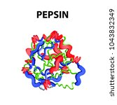 pepsin is a molecular chemical... | Shutterstock .eps vector #1043832349