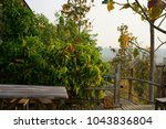 syngonium podophyllum  tricolor ... | Shutterstock . vector #1043836804