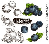 blueberries. hand drawn... | Shutterstock .eps vector #1043850694