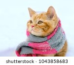 Stock photo portrait of a little kitten wearing knitted scarf outdoors in winter 1043858683
