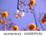 low angle view of white flower... | Shutterstock . vector #1043859196