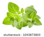 Oregano Leaves In Closeup