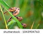 Cute little birds. green nature ...