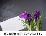 crocus  plural crocuses or...   Shutterstock . vector #1043913556