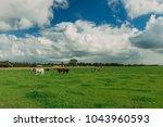 cows grazing on grassy green... | Shutterstock . vector #1043960593