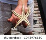 a boy holding a starfish.... | Shutterstock . vector #1043976850
