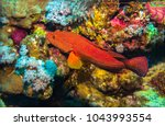 underwater coral fish close up | Shutterstock . vector #1043993554