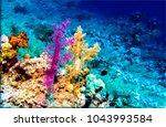 underwater coral world scenery | Shutterstock . vector #1043993584