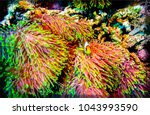 underwater life close up | Shutterstock . vector #1043993590