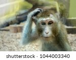 monkey scratching his head  the ... | Shutterstock . vector #1044003340