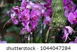 beautiful blooming orchid... | Shutterstock . vector #1044047284