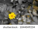 yellow flower by electronic... | Shutterstock . vector #1044049234