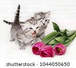 Stock photo the kitten meows shouts purebred kitten baby kitten 1044050650