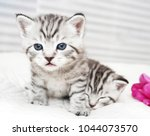 Stock photo portrait of a cute kitten striped baby kitten 1044073570