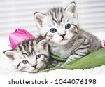 Stock photo lovely kittens with tulip flowers 1044076198