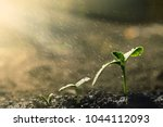 green seedling growing on the... | Shutterstock . vector #1044112093