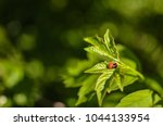 insects mating. ladybug mating... | Shutterstock . vector #1044133954