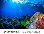 underwater coral reef fish... | Shutterstock . vector #1044142516