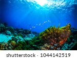Underwater World Coral Reef...