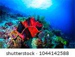 underwater life landscape | Shutterstock . vector #1044142588