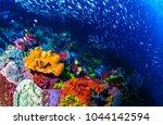 Underwater life landscape. fish ...