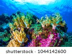 Underwater Coral Reef Sea View...