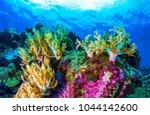 underwater coral reef sea view... | Shutterstock . vector #1044142600