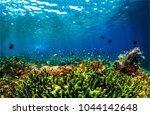 underwater life landscape | Shutterstock . vector #1044142648
