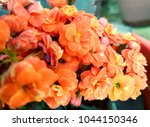 flower background for card and... | Shutterstock . vector #1044150346